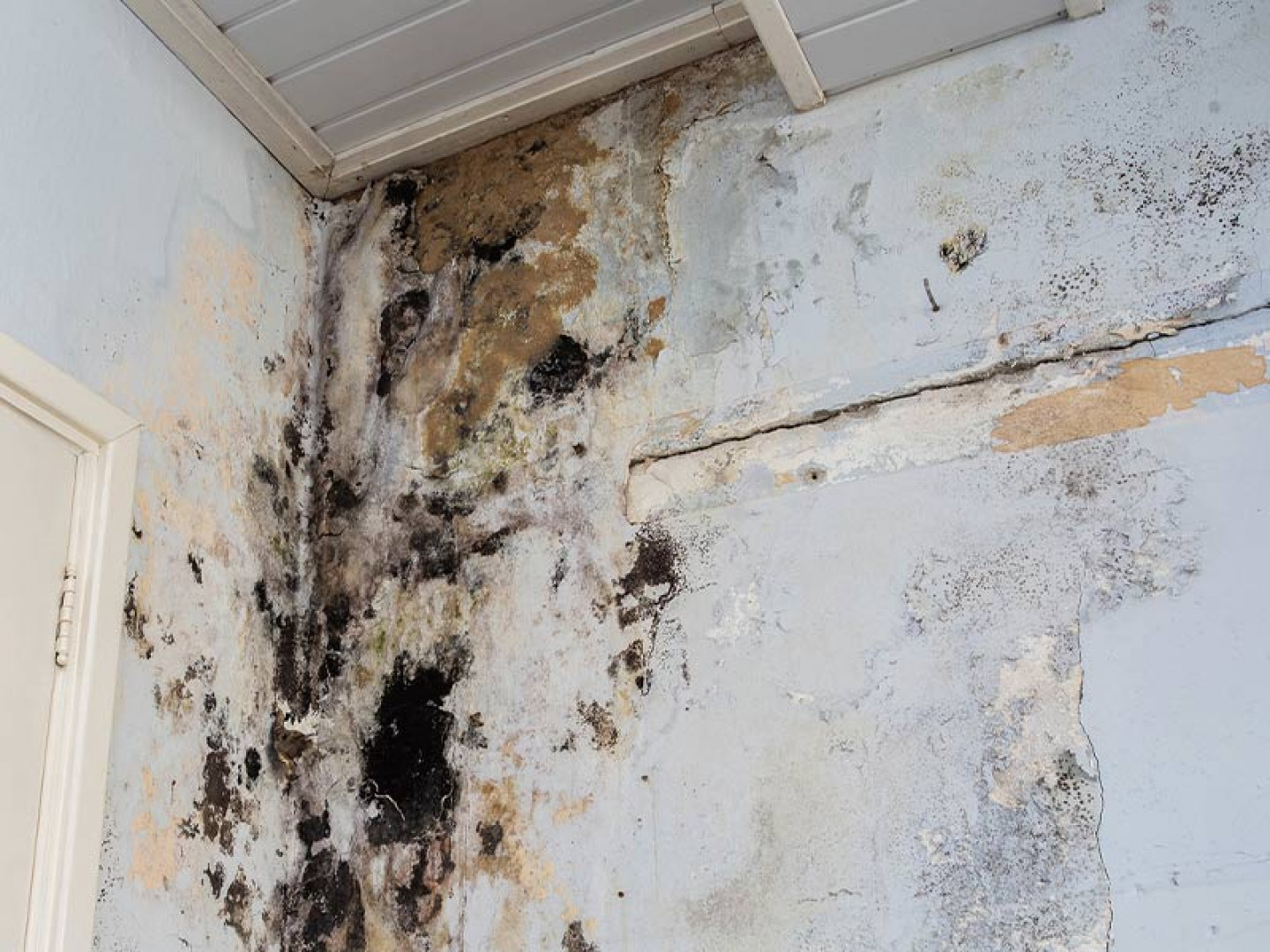Mold can cause major damage